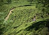 Terraces in Motion (The Spirit of the World) Tags: munnar india kerala tea teaterraces plants patterns agriculture green worker local trees rural crops teapicker