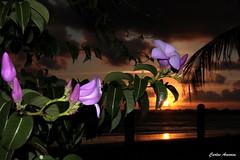 Sunset em Serrambi (Carlos Amorim (Camorim10)) Tags: sunset prdosol praia entardecer anoitecer serrambi flor flores ipojuca pernambuco