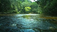 100_0231 (bernardobath) Tags: digital analog xpro amazonas wild forest crrego rio paisagem landscape