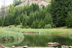 a Tatár-szoros / the Tatar-gorge (debreczeniemoke) Tags: nyár summer erdő forest patak creek tatárszoros cheiletătarului tatargorge gutinhegység munţiigutin gutinmountains olympusem5