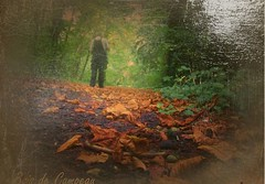 2016-09-27 huile effet Patrick feuilles mortes (april-mo) Tags: oil filter wood autumn deadleaves leaves atmonsphere