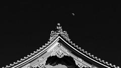 Temple & Moon (Greg Tokyo) Tags: japan tokyo asakusa buddhism bw 2016 moon 6d
