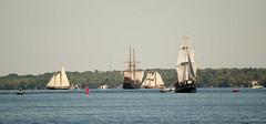 DSC_3295 (mkutz2011) Tags: tallships water waterfront pirates brockville nikon