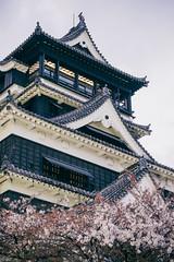 (ViktorLeung) Tags: japan  cherryblossom  sakura kumamoto kyushu