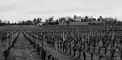 Chteau Bellevue - Plassac - Gironde (JD Sans) Tags: bw blackwhite vineyard noiretblanc nb chteau vigne m43 micro43 43