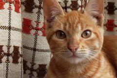 Pepita (*paz) Tags: eye window animal yellow cat