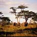TZ Serengeti NP 0202 005