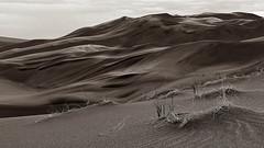 Dunes - Explored (Tony Hochstetler) Tags: blackandwhite bw mono sand nikon colorado monotone d300 sanddunesnationalmonument nikon2870mmf28 greatsanddunesnationalparkpreserve
