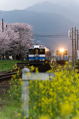 Train that runs the spring (SYU*2) Tags: pink flowers mountain flower nature colors beautiful yellow japan train landscape spring nikon scenery blossom bokeh nopeople sakura cherryblossoms d800 70300 nikoor rapeseedblossom