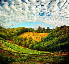Sky arc (Katarina 2353) Tags: summer landscape vineyard nikon katarinastefanovic katarina2353