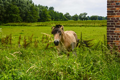 Animals. (ost_jean) Tags: animals horses cheval nature caballo pferd nikon d5200 ostjean