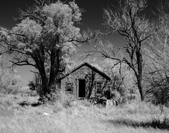 Untitled (unknown quantity) Tags: abandoned shadows opendoor grass monochrome sky deadtrees weathered detritus infrared deterioration abandonedhouse derelict rot blackandwhite trees unpaintedwood