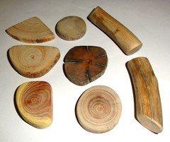 Wood slices, natural wood jewelry supplies findings, crafts (john bonham2) Tags: wood wooden mix crafts jewelry supplies slices supply findings jewelrysupplies jewelryfindings jewelrycrafts woodslices woodmix