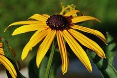 Flower (Hugo von Schreck) Tags: flower blume blte macro makro hugovonschreck canoneos5dsr tamron28300mmf3563divcpzda010