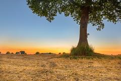 the tree (bhansen.kiel) Tags: sunny tree baum hill harvest field sunset red sky blue green canon landscape landschaft kiel dnischenhagen schleswigholstein germany deutschland summer heat