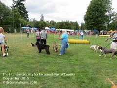 DAT2016_Crowd_1175 (greytoes_99) Tags: agility cat dat2015 dat2016 event humanesocietytacoma people summer tacoma tacomahs volunteers dog humananimalbond lakewood wa us