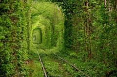 Mysterious Train... (JamesGoblin) Tags: wood green railway train mystery calm nature leaves grass tunnel