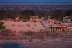 Local village in the savannah (richardkt4545) Tags: wildlife nature bird couple desert desertbird etosha namibia africa afrika animal outdoor feather giraffe elephant sociable weaver hut sunset savannah tin roof thorn acacia nest baby
