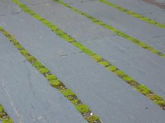 Schieferbretter & grne Fuge (Jrg Paul Kaspari) Tags: trierweiler garten moderngarden sommer summer 2016 schiefer slate schieferbretter fugen sternmoos anthrazit grn moos grne fuge textur texture minimal minimalism