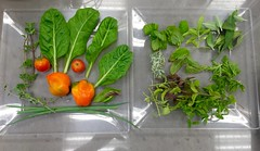 Daily Harvest (Assaf Shtilman) Tags: herbs sage mint choy bok vegetables orange tomatoes peppers