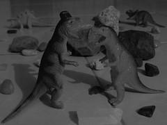 Pelea de dinosaurios  (Xic Eseyosoyese (Juan Antonio)) Tags: pelea de dinosaurios  juguetes dinos blanco y negro monocromtico piedritas piedras rocas 4 2 carnvoros herbivoros canon powershot sx170is