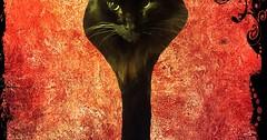 Relax Cat says chill via http://ift.tt/29KELz0 (dozhub) Tags: cat kitty kitten cute funny aww adorable cats
