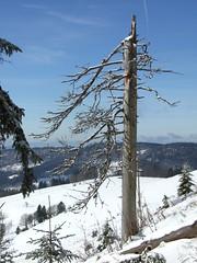 Black Forest (only_point_five) Tags: schnee winter sky snow mountains tree germany deutschland fuji himmel berge baden schwarzwald blackforest baum todtnauberg badenwrttemberg sdschwarzwald s6500fd grosherzogtumbaden grandduchyofbaden
