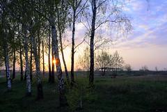 spring (enzzo_) Tags: sunset sky cloud sun tree nature sunshine clouds landscape spring nikon ukraine foliage nikkor landschaft epic vadim springtime beldy nikon1 nikkor10mmf28 nikonone nikonpassion landscapesdreams nikonflickraward theacademytreealley nikon1v1 nikonv1 landscapesworld vadimbeldy