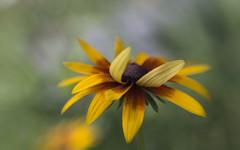 The dance (tsandra996) Tags: plant flower nature garden flora wind