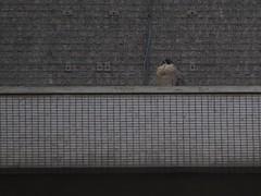 Charlie on the ledge