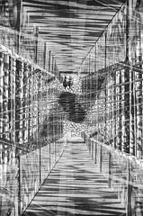 VOYAGER2 (SirachV) Tags: blackandwhite film analog nikon doubleexposure trix mirrored f3 analogue inverted multiexposure shootfilm istillshootfilm