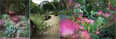 Jardins extraordinaires I (Sandrine Bron) Tags: chaumontsurloire garden green vert nature eau water fleur flower albizia