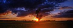 Sunset (Sareni) Tags: sareni serbia srbija vojvodina banat juznibant alibunar polje poljana livada field grass trava tree drvo light svetlost senke silhouette colors boje sky clouds sun sjaj nebo oblaci sunce sunset sundown zalazak vece evening hdr highdynamicrange photomatix summer leto may 2014 twop