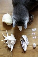 Sea Things (noriko.stardust) Tags: sea seashells shell sponge curiosity cabinetofcuriosity