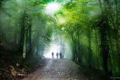 ARGIAREN BILLA 2 (juan luis olaeta) Tags: photoshop lightroom paisages landscape natura bosque forest hayedo france fujifilm