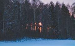 (Jori Samonen) Tags: trees winter sunset snow finland helsinki viikki