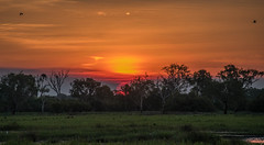 Sunset over Yellow River Billabong (Sean Greenland) Tags: sunset colour bird water beautiful birds flickr colours nt billabong northernterritory flickrexplore