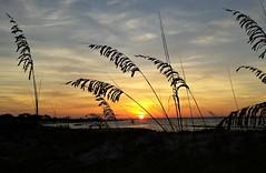 Sunrise over the Grand lagoon (Dave* Seven One) Tags: sunrise grandlagoon beach pcb panamacitybeach florida standrewsstparkfl beachdunes ocean gulfofmexico camping explore