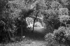 Entrance_BW (Joe Josephs: 2,650,890 views - thank you) Tags: landscapephotography landscapes trees forests california californiacentralcoast californiacoast californialandscape travelphotography travel pinetrees pineforests trek hiking fineartphotography fog foggy foggyweather cambriacalifornia cambria joejosephsphotography joejosephs