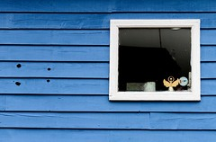 Blue (Karen_Chappell) Tags: window blue angel wood wooden paint painted shed building architecture pettyharbour newfoundland nfld clapboard white trim