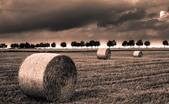 Strong land (Carlos Lacano) Tags: landscape clouds field fuji xe2s 35mm 14 bw sepia carlos lacano