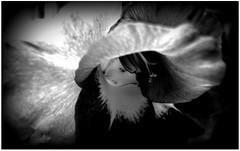 (Riik@mctr) Tags: gladiolus gladioli garden flower nokia n95 8g fone phone