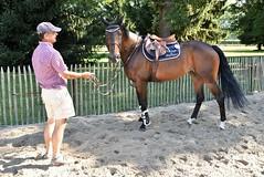 DSC_0944 (2) (ploufjf_64) Tags: paus show jumping chevaux pau 2016
