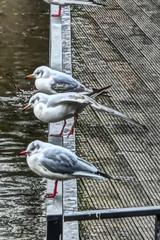 Wasservgel am Hagenbucher (Renate Karle) Tags: wasservgel gelnder fluss