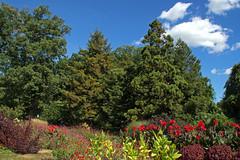 IMG_7780a (judyflo1) Tags: garden latesummer flowers landscape sky clouds cloudless sulphur