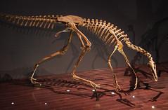 Ornithomimus  - Bird Mimic (juan_guthrie) Tags: drumheller alberta royaltyrrellmuseum dynosaur