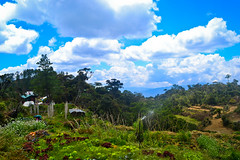 Mt. Pulag - Ranger Station (AnaZamora) Tags: blue summer sky sun mountain green nature vegetables forest landscape asia day philippines mtpulag greenforest nikonnikon d3100
