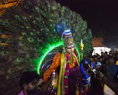 HL8A9319 (deepchi1) Tags: india festivals peacock kerala kavadi kavadifestival