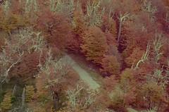 Bosque (J.J.Evan) Tags: road wood autumn trees color colour tree argentina forest madera loneliness camino cloudy grove path hill abril cerro bosque otto árbol april otoño nublado soledad melancholy melancolía bariloche arboleda