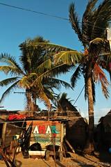Amar al mar (Manzana Morales Photography - saritale56@gmail.com) Tags: life love nature water landscape island honduras traveling cay palmera isla travelers cayoscochinos cayuco manzanamoralesphotography